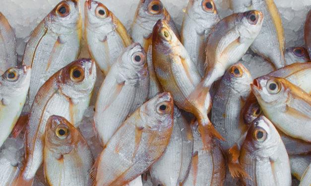 Comment repérer la fraîcheur d'un poisson ?