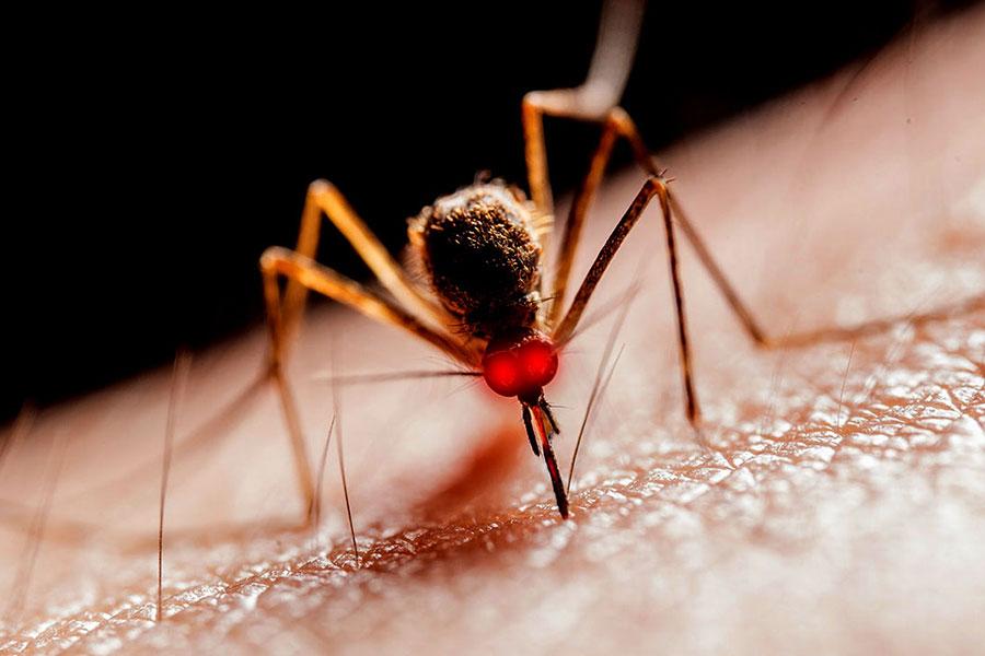 quest-ce-qui-attire-les-moustiques